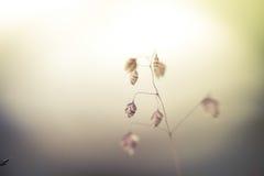 Alba stupefacente al prato di estate con i wildflowers Immagine Stock Libera da Diritti