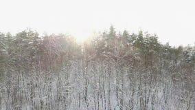 Alba stupefacente della foresta di inverno Bella immagine di inverno landscape Alba molto bella di inverno Sopra le cime degli al archivi video