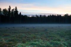 Alba su un abbattimento della foresta immagini stock