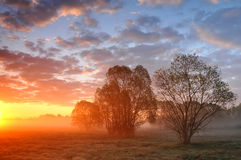 Alba su un prato nebbioso con gli alberi Fotografia Stock