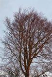 Alba su una cima d'albero fotografie stock