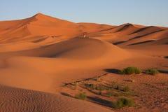 Alba sul deserto Fotografia Stock