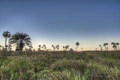 Alba sul parco nazionale Palmar di EL, Argentina Immagini Stock Libere da Diritti