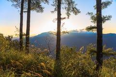 Alba sulla montagna di Alishan in Taiwan Immagine Stock Libera da Diritti