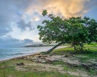 Alba sulla spiaggia a distanza dell'oceano della Giamaica con l'albero in priorità alta Fotografia Stock