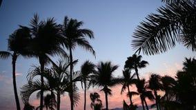 Alba tropicale video d archivio