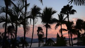 Alba tropicale stock footage