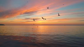 Alba tropicale sulla spiaggia Cloudscape ed uccelli sopra il mare video d archivio