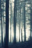 Alba in una foresta con nebbia fotografia stock