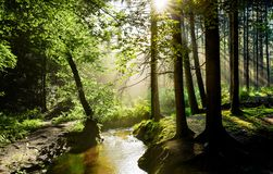 Alba in una foresta nebbiosa in Germania fotografie stock