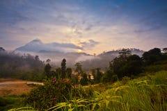Alba in una giungla tropicale Fotografia Stock