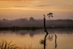 Alba in una zona umida di Florida Fotografia Stock Libera da Diritti