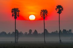 Alba variopinta nel giacimento del riso con l'albero della palma da zucchero Immagini Stock