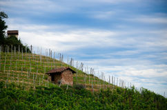 Alba, viñedos de Roero Foto de archivo