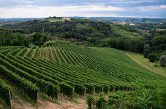 Alba, vignobles de Roero Photo stock
