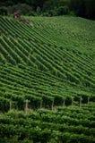 Alba, vignobles du Langhe Photo libre de droits