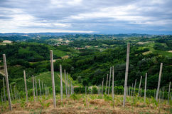 Alba, vineyards of the Langhe Royalty Free Stock Image