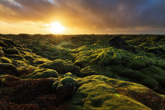 Alba vulcanica di Eldhraun fotografia stock libera da diritti