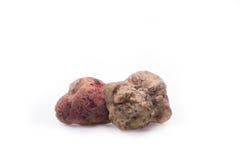 Alba white truffle. Tuber on isolated white background royalty free stock photography