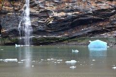 albacore Стоковое фото RF