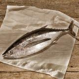 Albacore tuńczyka brzmienia sepiowy tło Fotografia Stock