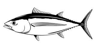 Free Albacore Tuna Fish Illustration Royalty Free Stock Image - 146787696