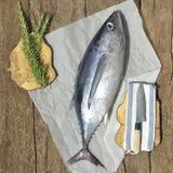 Albacore tuna fish Stock Photo