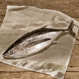 Albacore tuna sepia tone background Stock Photography
