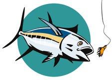 Albacore Tuna taking the bait Stock Photography