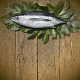 Albacore on wooden background Royalty Free Stock Photography