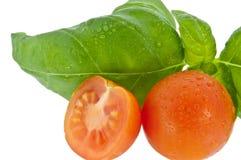 Albahaca con el pequeño tomate (con el camino de recortes) Fotos de archivo libres de regalías