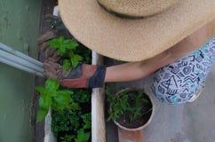 Albahaca 3 de la mano de la muchacha Imagen de archivo libre de regalías