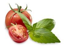 Albahaca del tomate Imagen de archivo libre de regalías