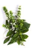 Albahaca floreciente Imagenes de archivo