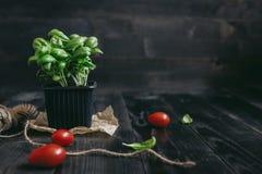 Albahaca fresca en pote y tomate en el fondo de madera con el espacio de la copia Imagen de archivo libre de regalías