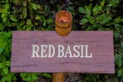 Albahaca roja Imagen de archivo