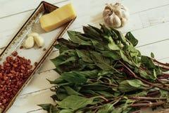 Albahaca verde Foto de archivo libre de regalías