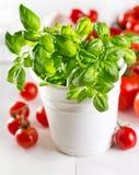 Albahaca verde fresca con los tomates de cereza Fotografía de archivo libre de regalías