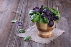 Albahaca verde y violeta fresca en poco cuenco de madera Fotografía de archivo libre de regalías