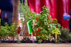 Albahaca y otras plantas Fotografía de archivo