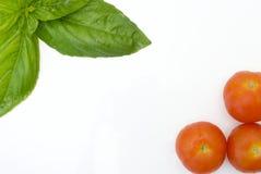 Albahaca y tomate en el fondo blanco Imagen de archivo libre de regalías