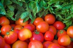 Albahaca y tomates Foto de archivo