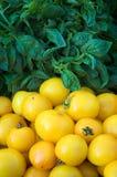 Albahaca y tomates amarillos Foto de archivo