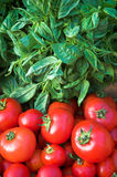 Albahaca y tomates rojos Foto de archivo libre de regalías