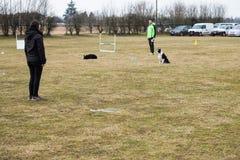ALBAIRATE MI, ITALIE - 23 FÉVRIER 2019 : un entraîneur de chien exécute un exercice avec des colleys de frontière pendant un essa image stock
