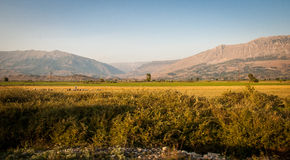2016, Albania, Beautiful panorama of albanian field and moutains. Yellow flowers Royalty Free Stock Photo