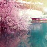 albania tirana April 13, 2018: Vår i Tirana Tycker om den blommande rosa trädbåtflyktingar för den konstgjorda sjön solen i kafé Arkivfoto