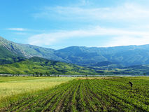 Albanian field with farmer. Farmer work on field in Albania with nice mountain Royalty Free Stock Photo