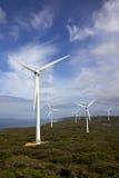 albany gospodarstwa rolnego wiatr Zdjęcie Stock