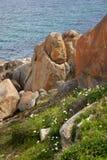 albany wybrzeże Obraz Royalty Free